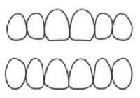 歯の形態イメージ